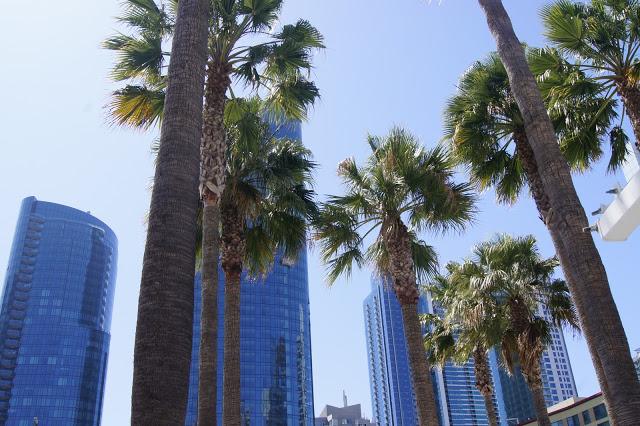 Das brauchen wir auch: Die zentrale Bus Plaza mit Palmen